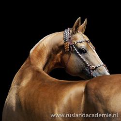 De Akhal-Teke is een volbloed paard uit Turkmenistan en het nationale symbool van het land. / Foto: © Artur Baboev.