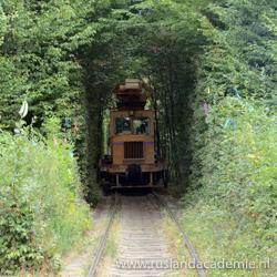 De romantische Tunnel of Love in Klevan, Oekraïne. / Foto: © Дядя Саша.