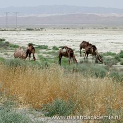 Kudde paarden in de provincie Balkan. / Foto: © Bruno Ghuijs.